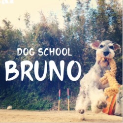 DOG SCHOOL BRUNO