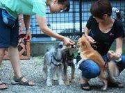 犬のしつけ方教室アウラ