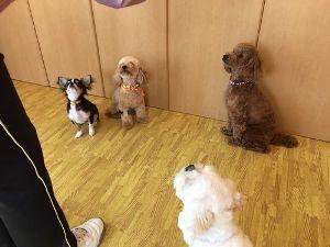 フォーチュンドッグ 犬の幼稚園