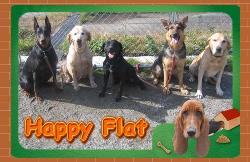 Happy Flat