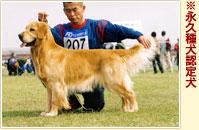 愛犬トレーニングスクールIKARI
