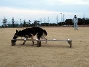 香取警察犬愛犬訓練所 訓練風景