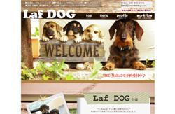 Laf DOG
