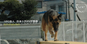 NPO法人 日本ケアドッグ協会