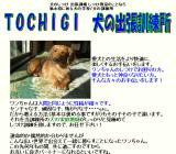 TOCHIGI 犬の出張訓練所