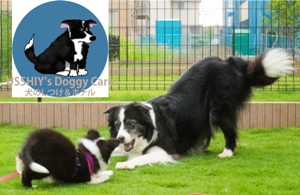 USSHIY's Doggy Care 犬のしつけ&ホテル